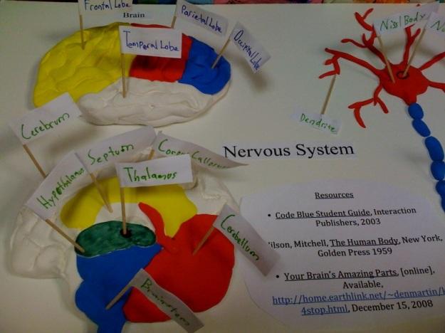 nervoussystem1