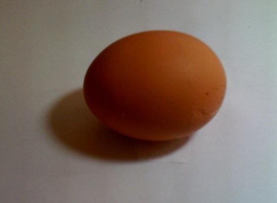 actual egg 1